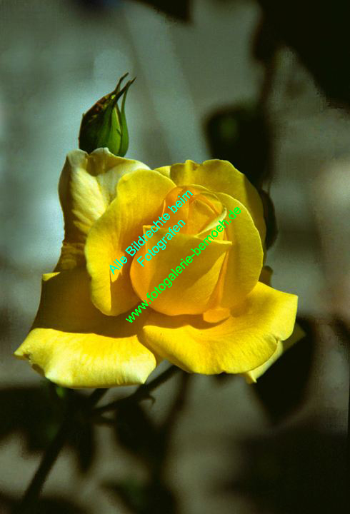 rosen-0048