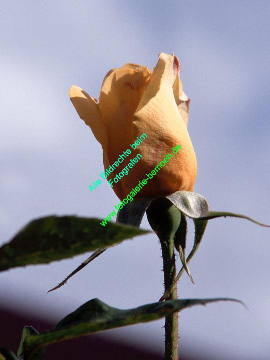 rosen-0051