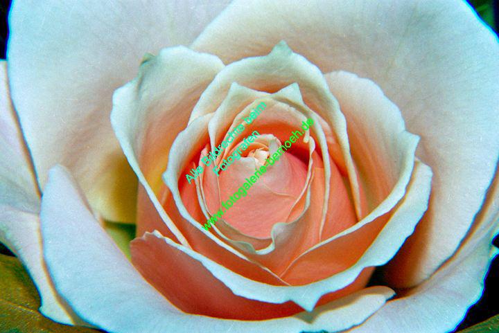 rosen-0053