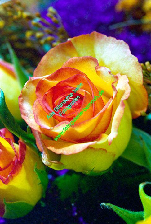 rosen-0056