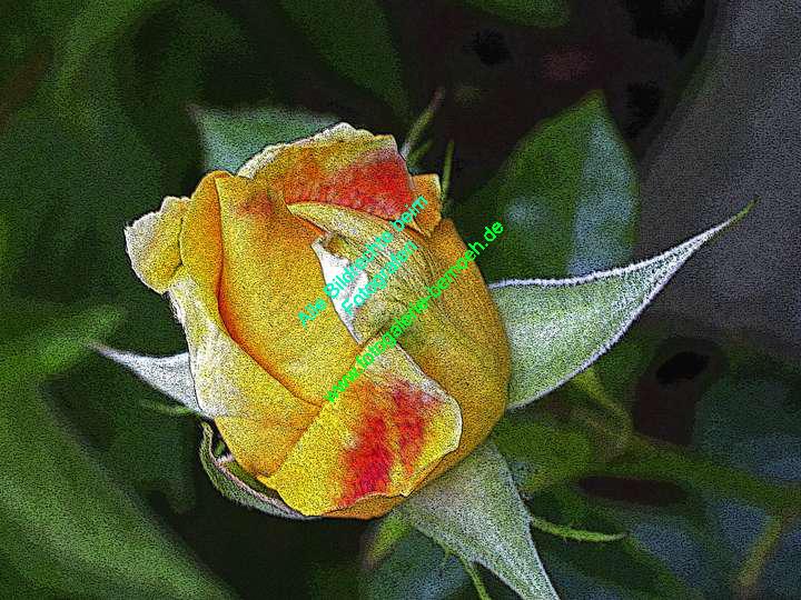 rosen-0057