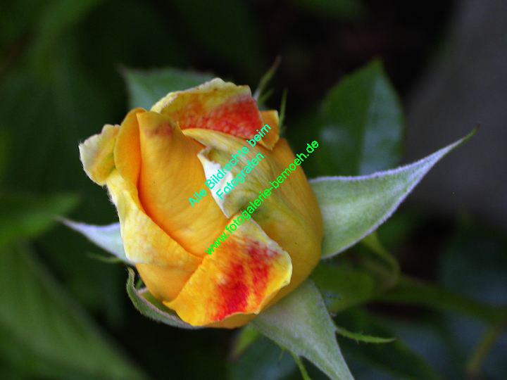 rosen-0058