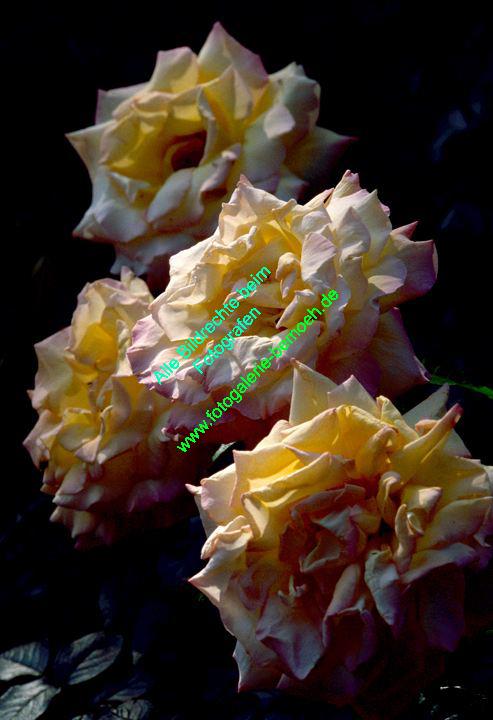 rosen-0059