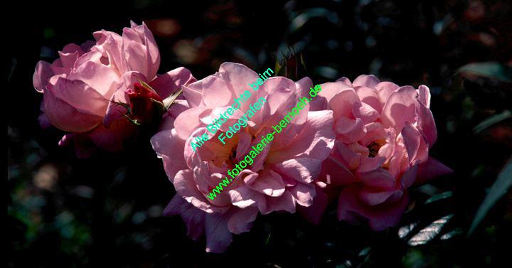 rosen-0060
