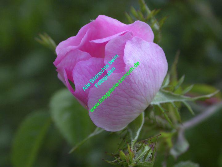rosen-0075