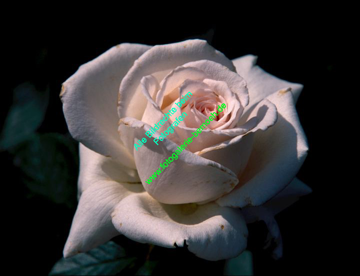 rosen-0076