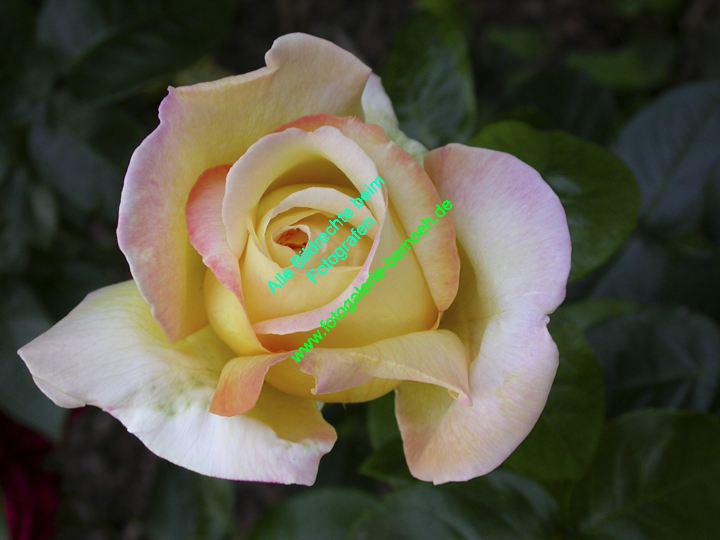 rosen-0079