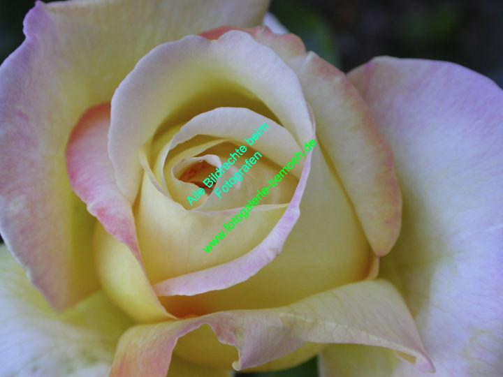 rosen-0080
