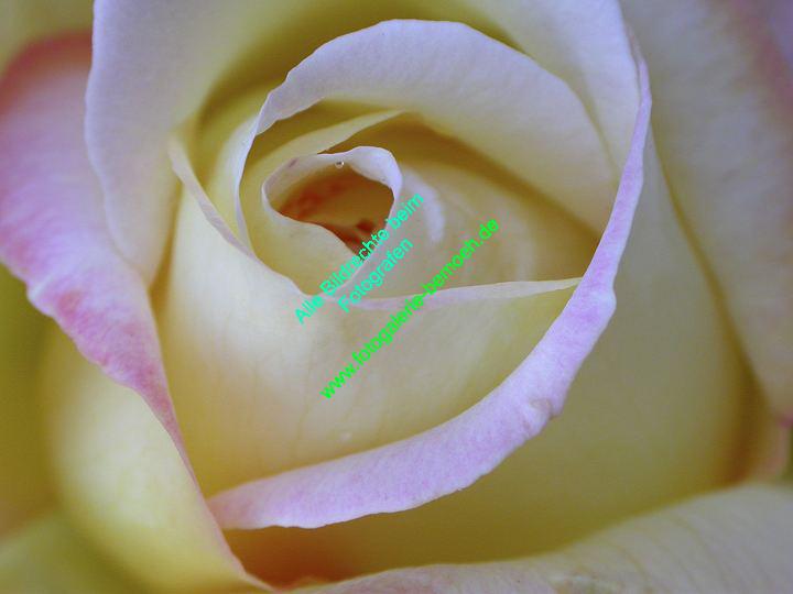 rosen-0081