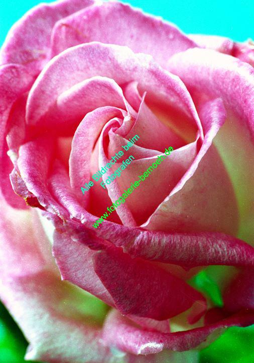 rosen-0085