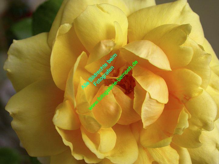 rosen-0086