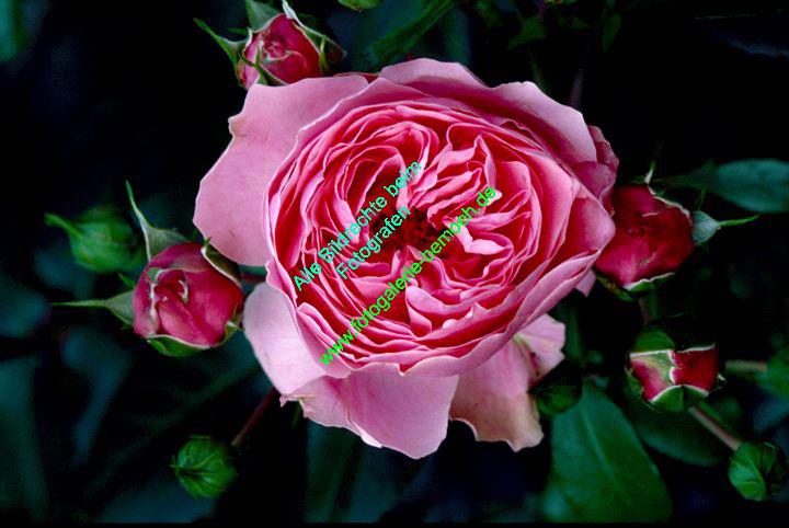 rosen-0089
