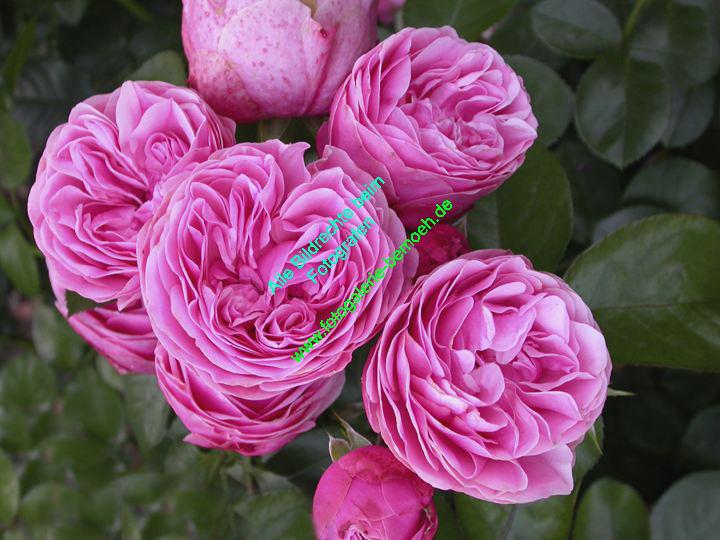 rosen-0090