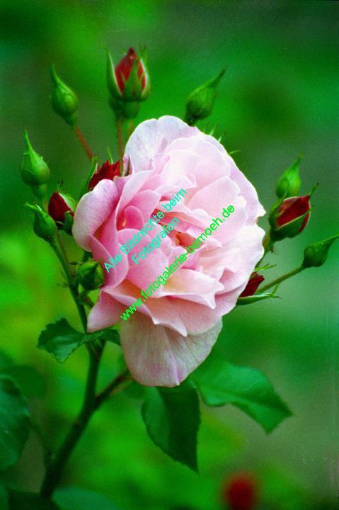 rosen-0094