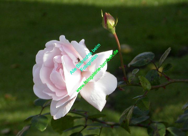 rosen-0096