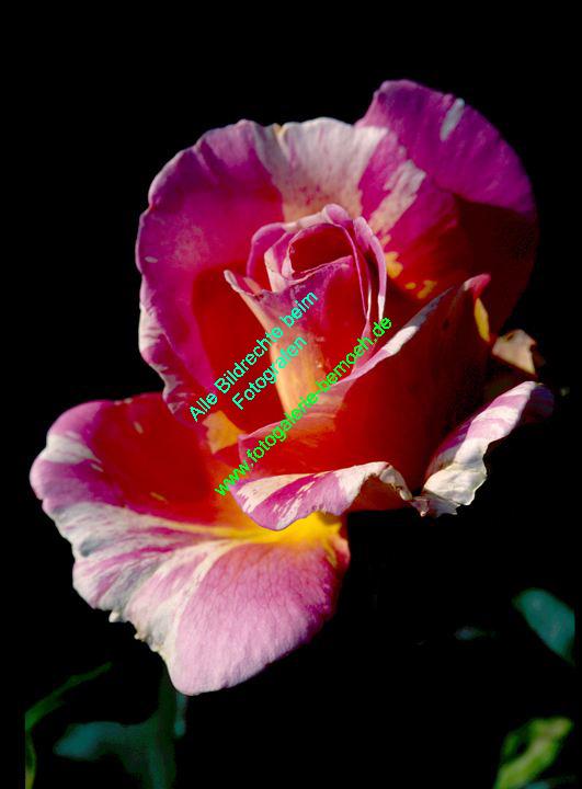 rosen-0103