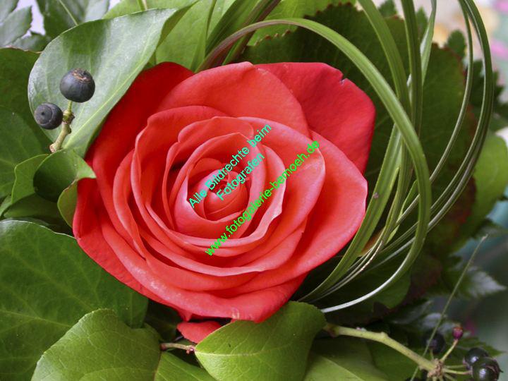 rosen-0108