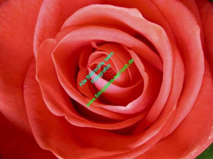rosen-0109
