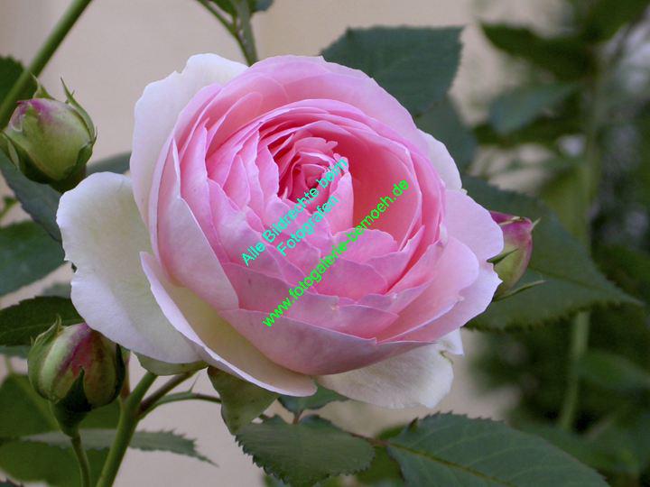 rosen-0112