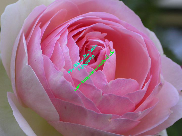rosen-0113