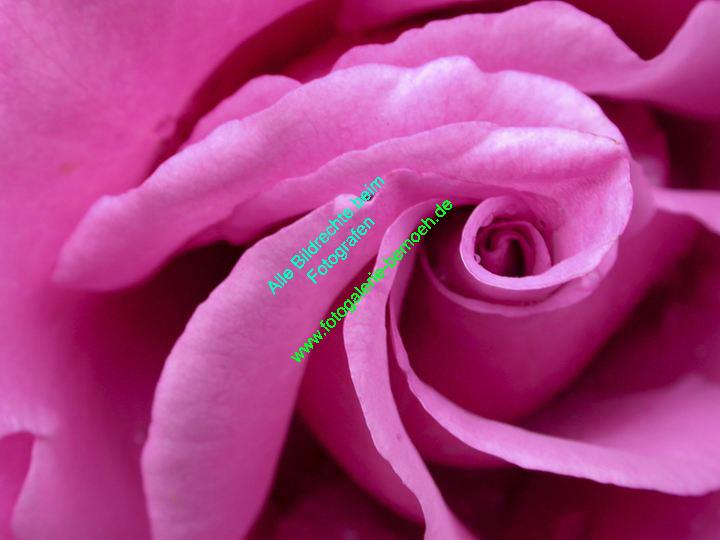 rosen-0117