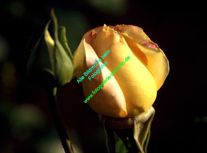 rosen-0124