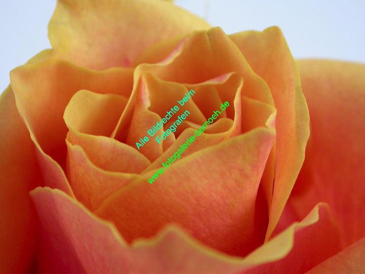 rosen-0126