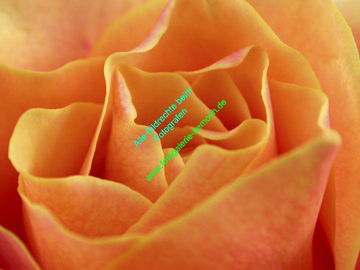 rosen-0129
