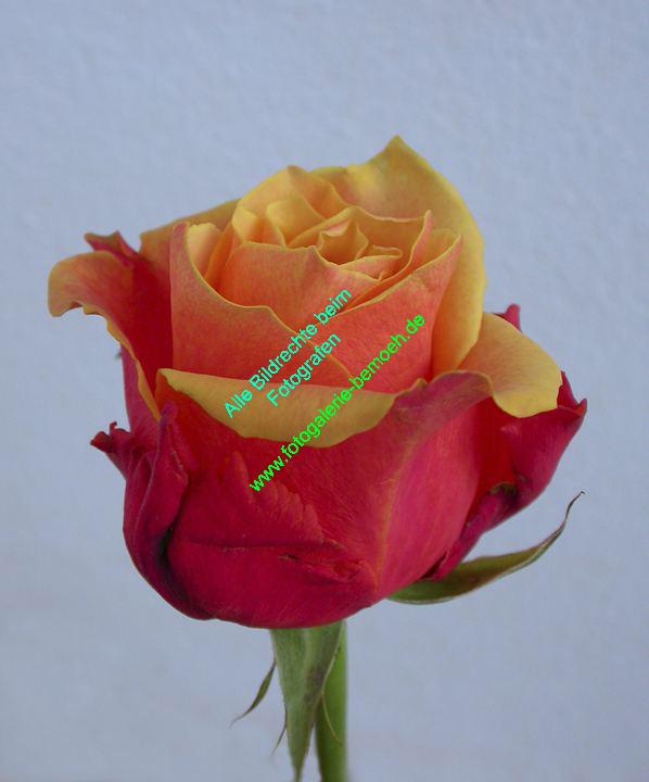 rosen-0130