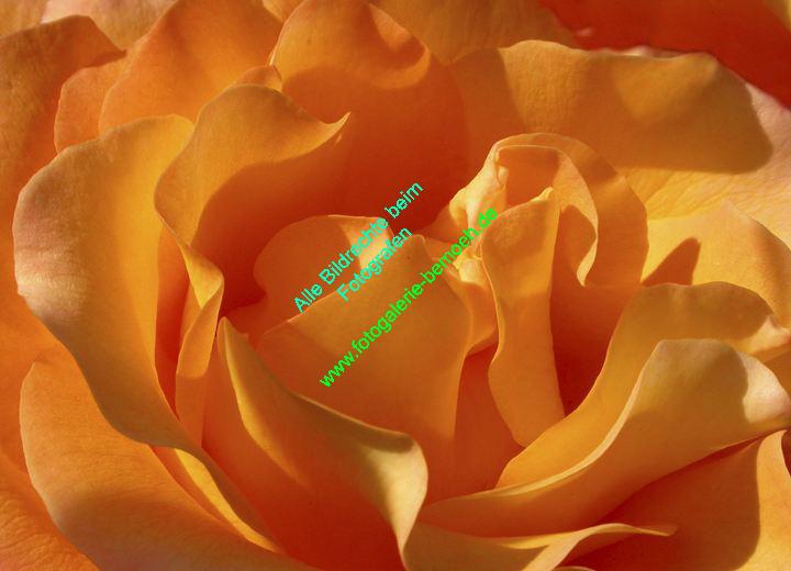 rosen-0132