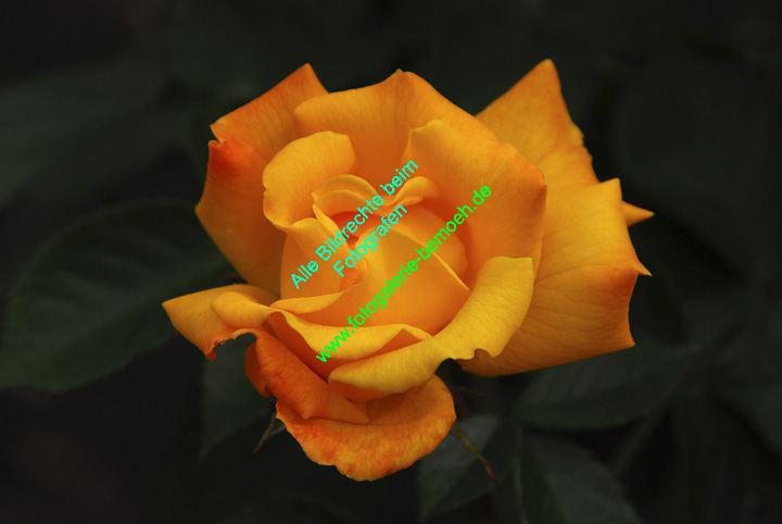 rosen-0134