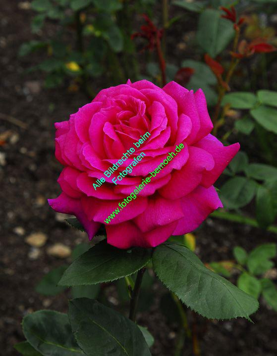 rosen-0139