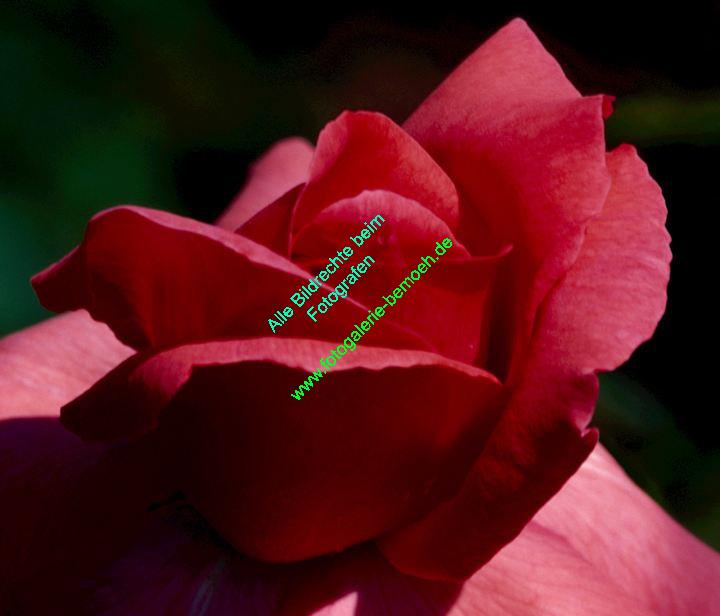 rosen-0141