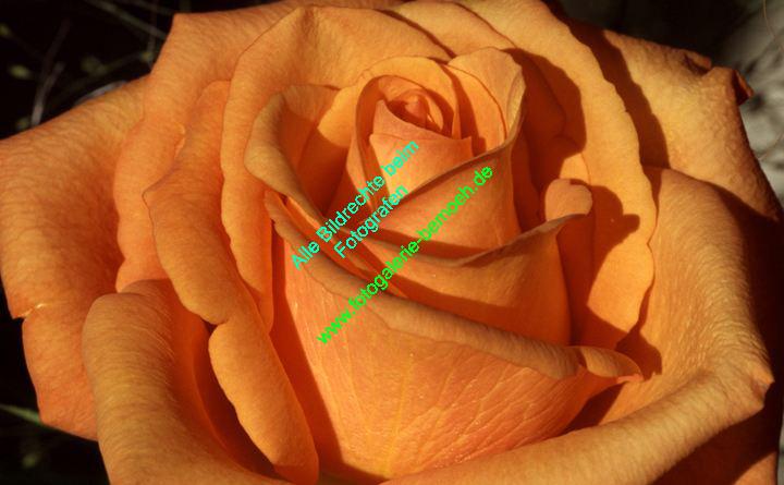rosen-0147