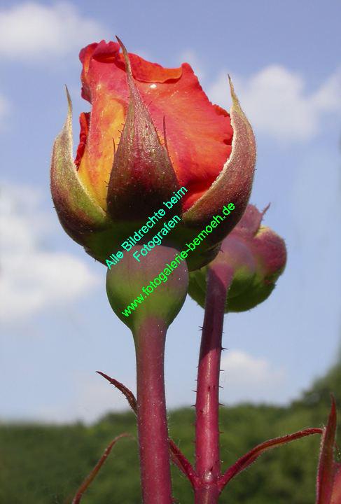 rosen-0150