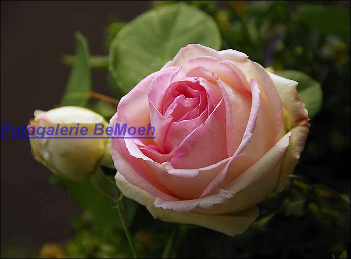 rosen-0154