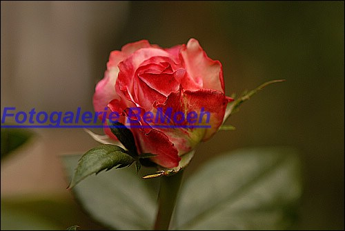 rosen-0157