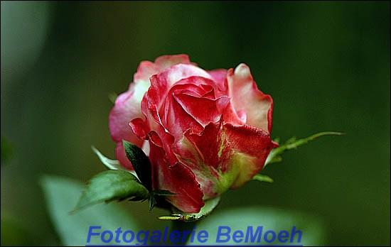 rosen-0158