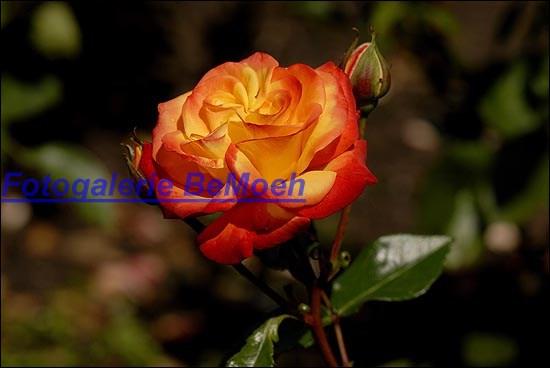 rosen-0160