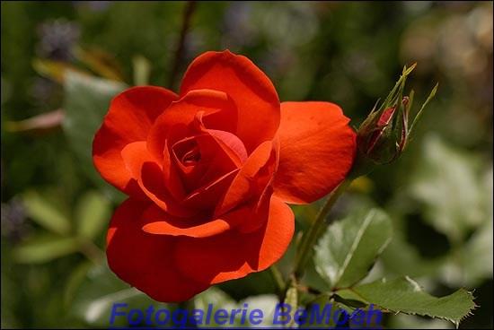 rosen-0163