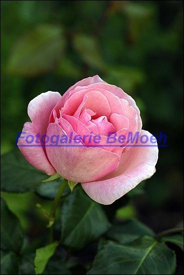 rosen-0166
