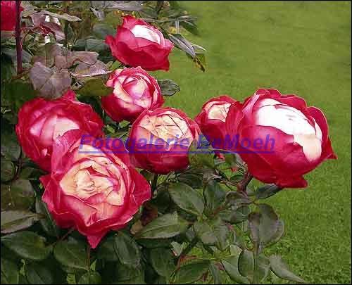 rosen-0167