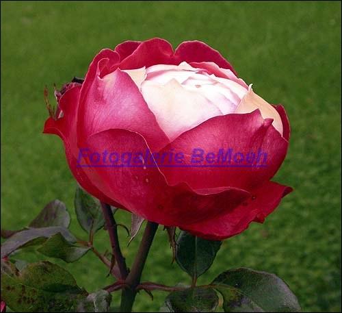 rosen-0168