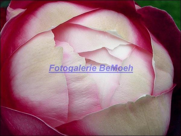 rosen-0169