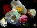rosen-regen-017