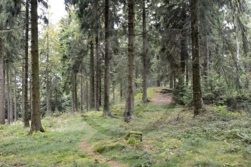 0013-Westwall-Weg-86-Bunkerpfad