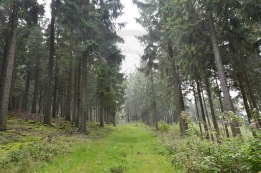 0035-Rund-Wanderweg-70