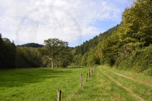 0117- 4 Tälerweg-56