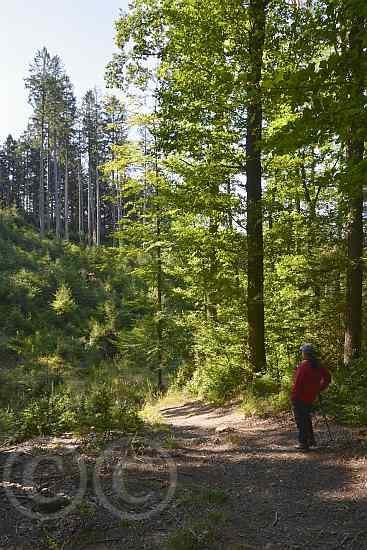 0146-Dreilägertalsperre-Struffelt Route