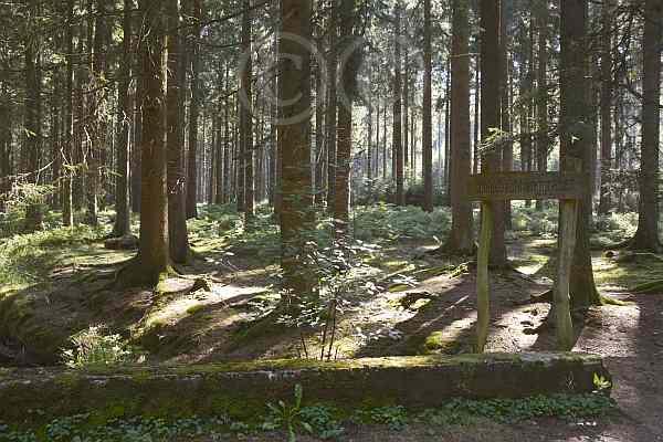 0156-Schleebachgraben-Struffeltroute